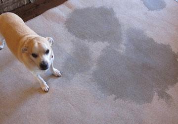 Carpet Sanitisation Services