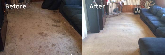 Professional Carpets Cleaning in Melbourne