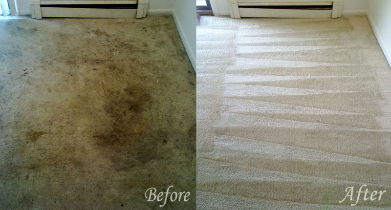 Carpet Steam Cleaning Karingal