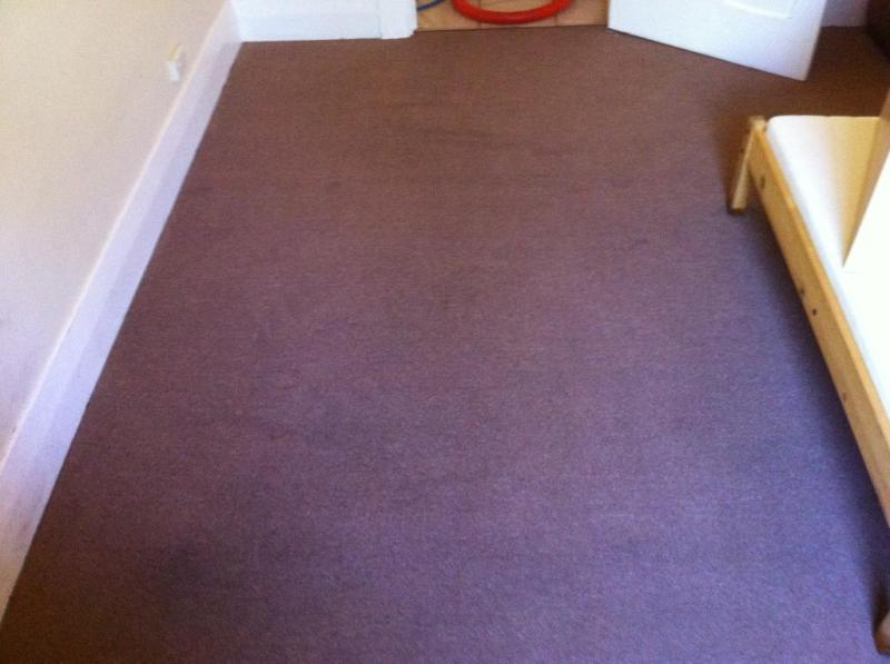 Carpet Steam Cleaning after