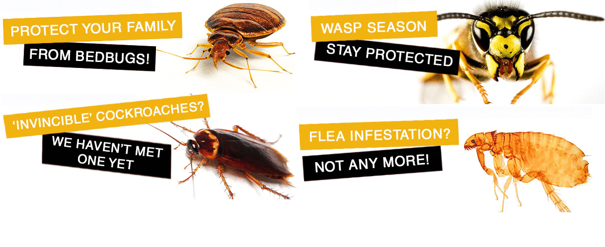 Pest Control Geelong