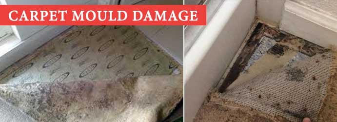 Carpet Mould Damage Undera