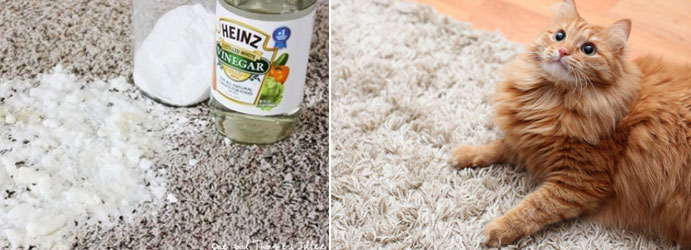 Urine Stain Removal from Carpet With Vinegar