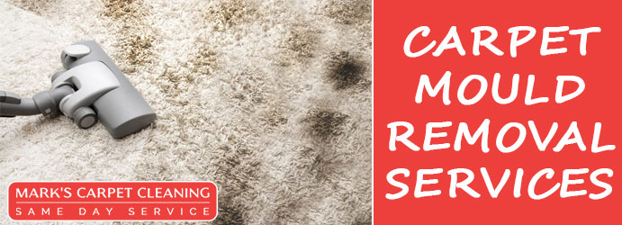 Carpet Mould Removal Spring Hill
