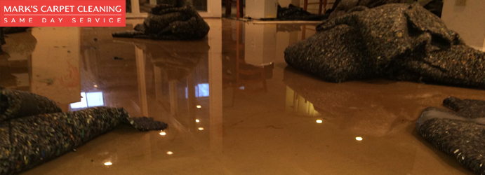 Best Carpet Flood Restoration Services Kurraba Point