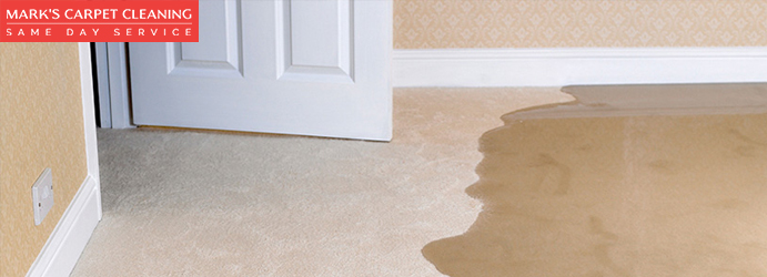 Water Damage Carpet Cleaning Mungo Brush