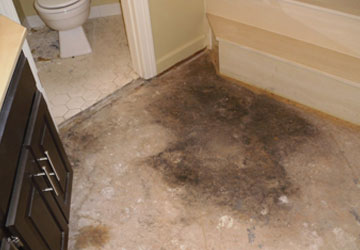 Carpet Mould Removal Service