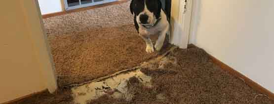 Carpet Pet Damage Repair Hocking