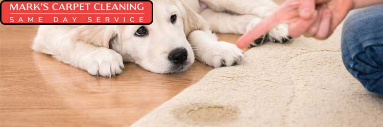 Carpet Pet Urine Stains Removal Service