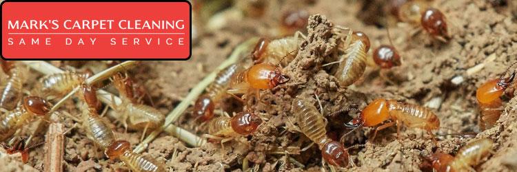Get Rid Of Termites