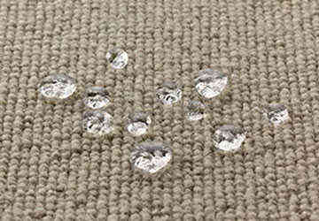 Stainguard carpet protection Quandong