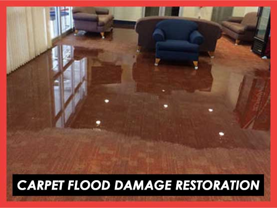 Carpet Flood Damage Restoration Melaleuca