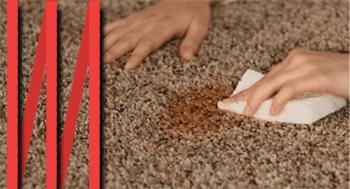 Carpet Spot Removal Pomeroy