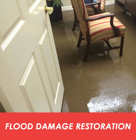 Expert Flood Damage Restoration Collector