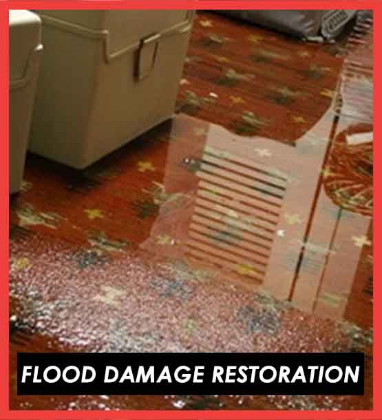 Flood Damag Restoration Melaleuca