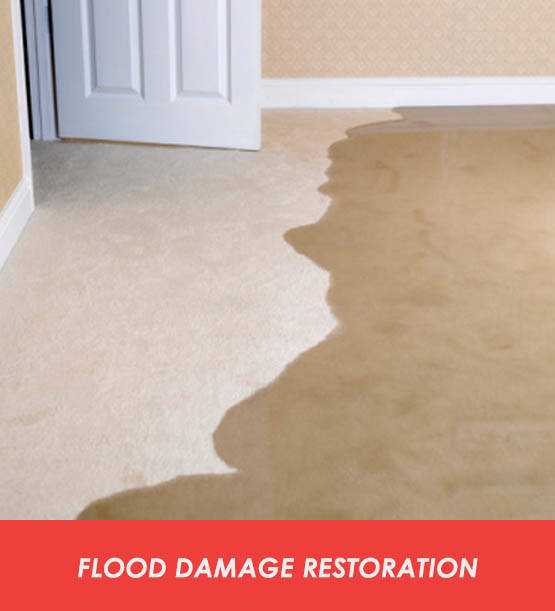 Flood Damage Restoration Teal Flat