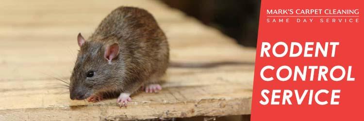 Rodent Control Service Brisbane