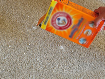 Carpet Odour Removal Page