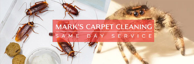 Affordable Pest Control Services Risdon Vale
