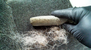 Carpet Pet Hair Removal