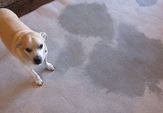 Carpet Sanitisation Launceston