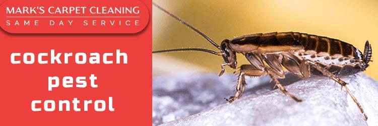 Cockroach Pest Control Launceston