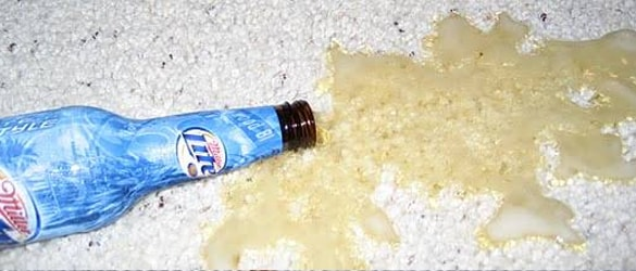 Carpet Beer Stain Removal Services