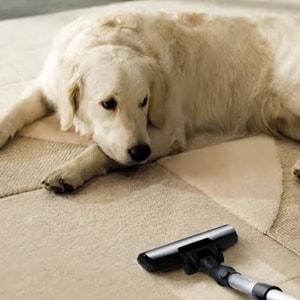 Get Rid Of Pet Hair From Carpet