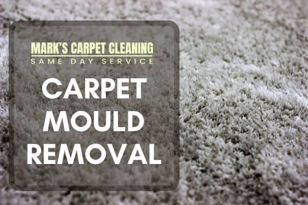 Carpet Mould Remova