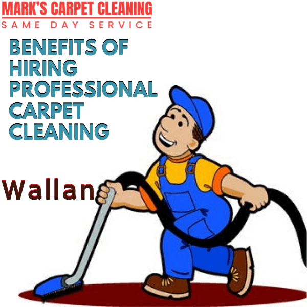 Why You Need Marks Expert Carpet Cleaning service in Wallan