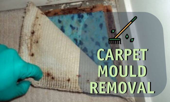 carpet mould removal perth