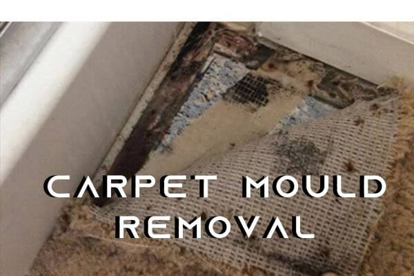 carpet mould removal Sydney